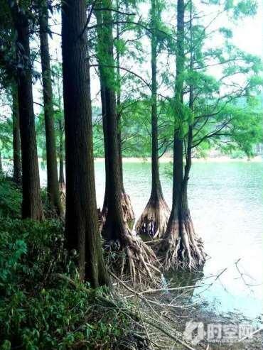 亚热带植物园2.jpg